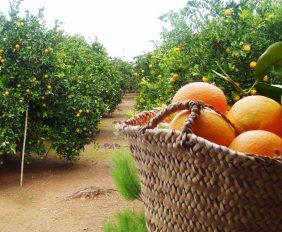 citricos1010-1000